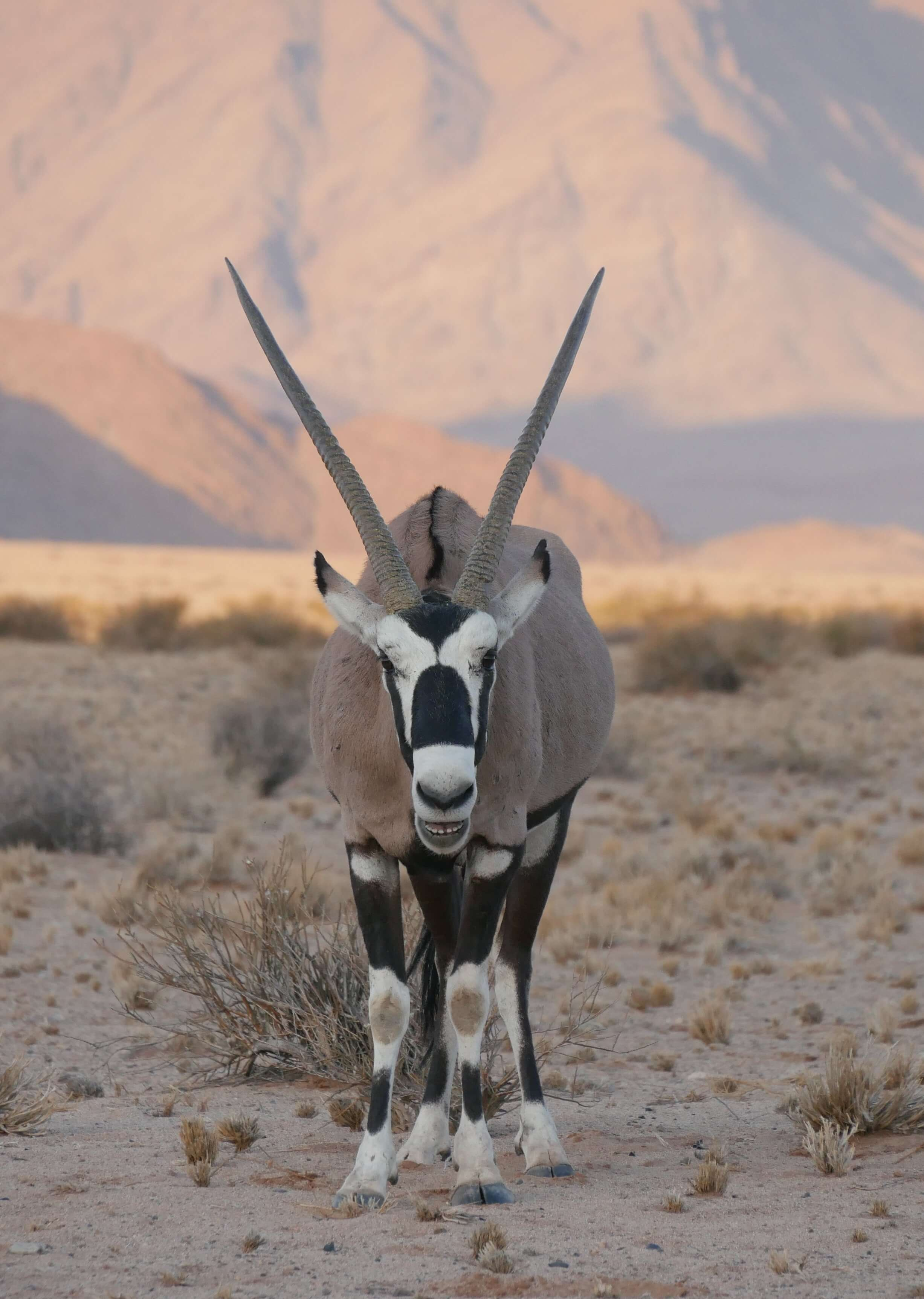 oryx, self drive namibia